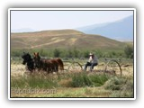 Haying with horses at Grant-Kohrs Ranch