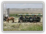 Covered Horse Drawn Wagon Tours at Grant-Kohrs Ranch